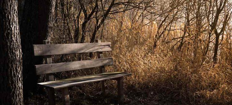 bench-1190768_960_720-min
