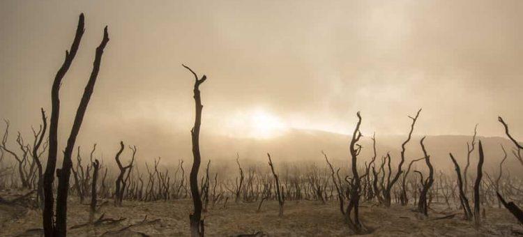 dead-trees-947331_960_720-min