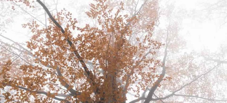 forest-3821416_960_720-min