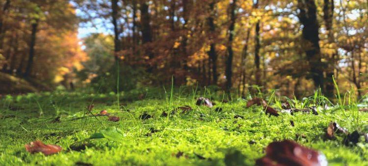 forest-floor-1031143_960_720-min
