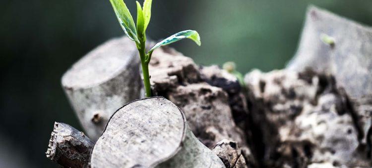 grow-781769_960_720-min