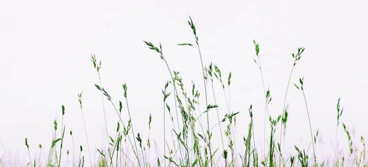 meadow-4320155_960_720-min