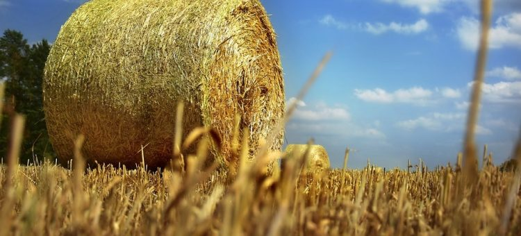 straw-bales-4310253_960_720-min