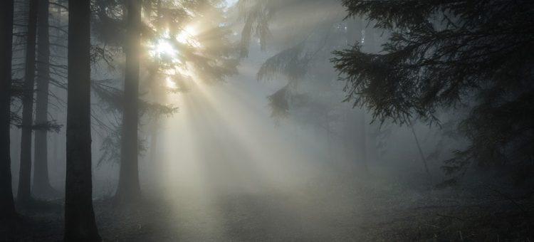 sunbeam-1547273_960_720-min