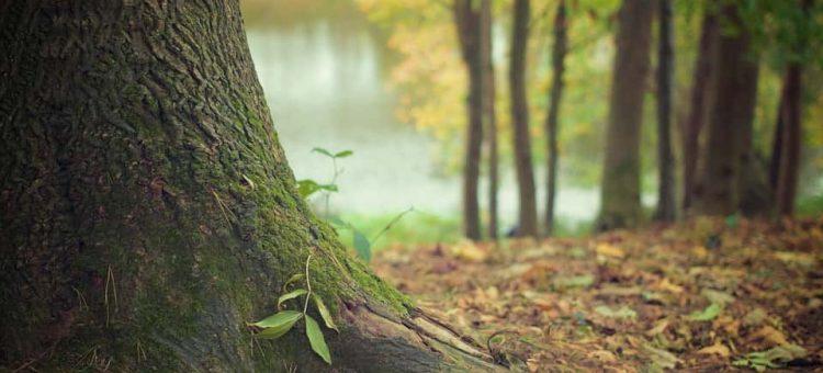 tree-trunk-569275_960_720-min