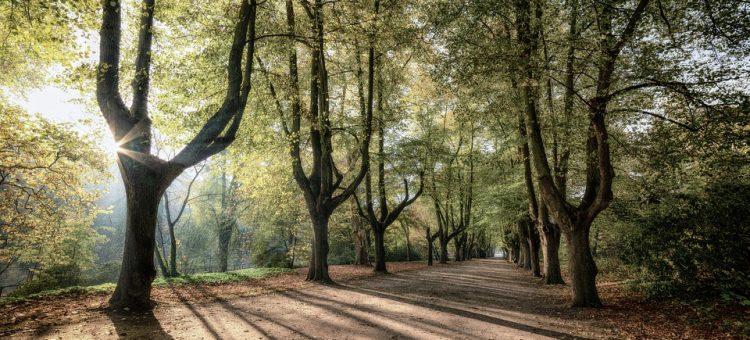 trees-sunrise-3796183_960_720